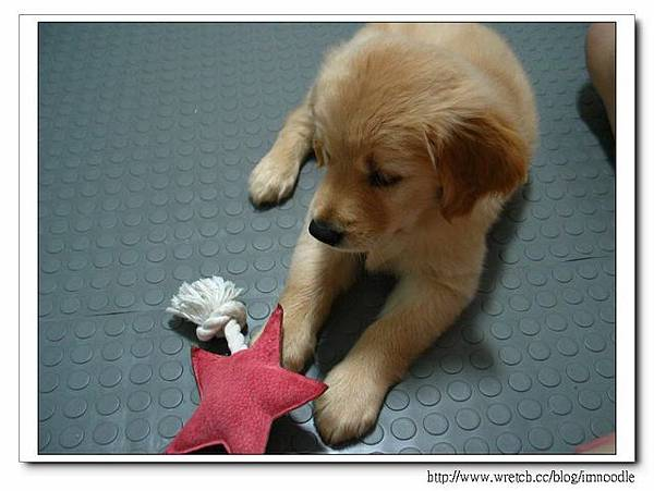 我弟說我給MIGO玩的都是星星玩具