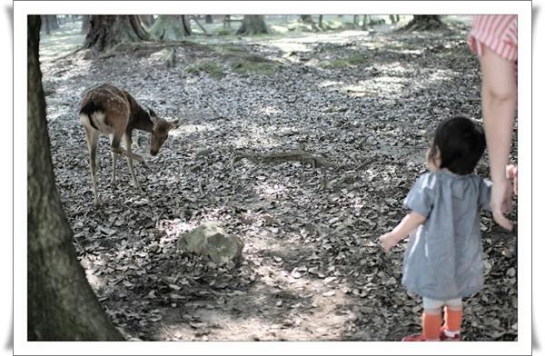 02奈良公園_帶阿咩接近鹿.jpg