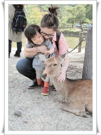 19東大寺鹿13_這隻鹿真的喜歡給我摸耶.jpg