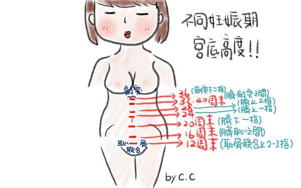 """護理師告訴妳:中期該注意的小變化""""胎動"""" @ 護理師CC×跟你說懷孕234 :: 痞客邦"""