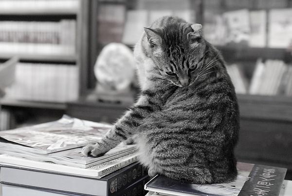花蓮 舊書舖子