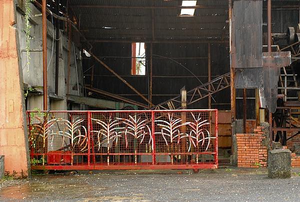 都蘭 新東糖廠 好的擺
