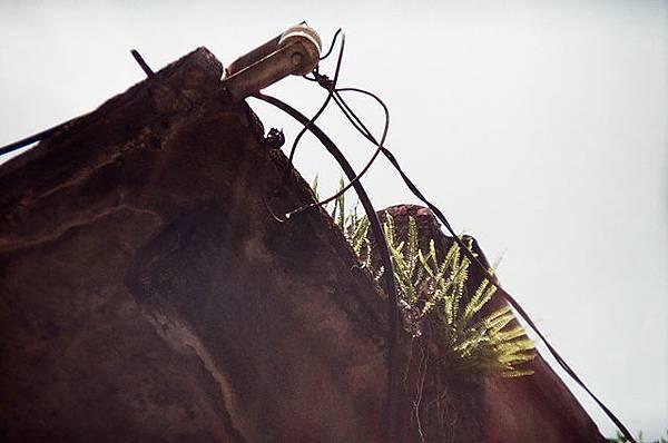 屋簷佇立的雜草