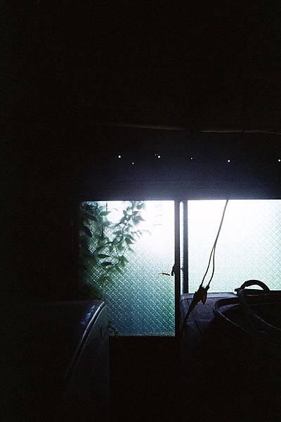 藤蔓爬滿窗