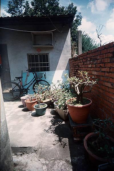 90歲獨居老人所照顧的植物