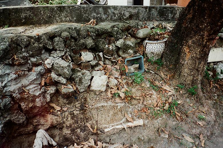 陋牆、枯盆、老樹