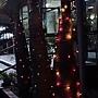 65.大王椰子聖誕樹!實在是很有創意!而且三人成群結黨(誤)看起來更壯觀!(哪裡?