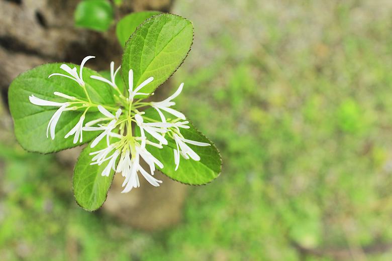 隨意長苗開花在樹旁