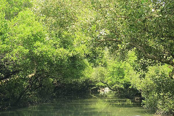 台灣亞馬遜河