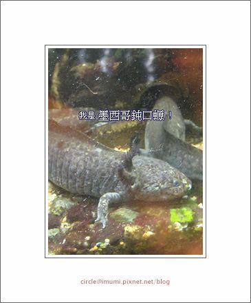 動物園04拷貝.png