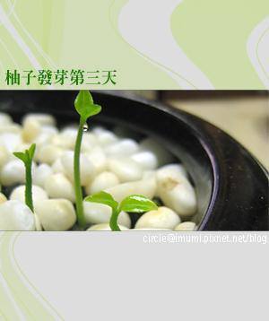 柚子03.jpg