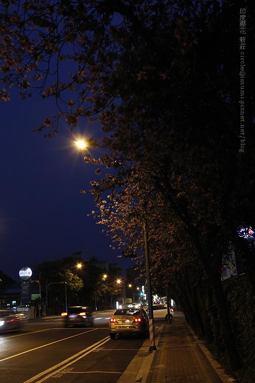 夜櫻.4/14 day24