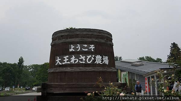 wasabi農場DSC04679.JPG