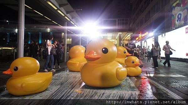 海港城rubber duckDSC09761.JPG
