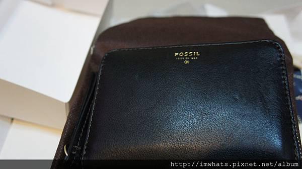 fossilDSC01197.JPG