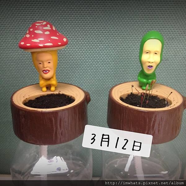 醜比頭小植栽IMG_3118.JPG