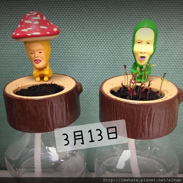 醜比頭小植栽IMG_3138.JPG