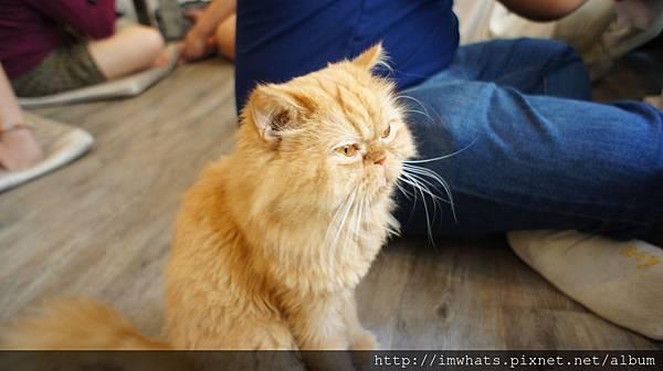 caturday cat cafeDSC04198.JPG