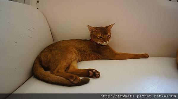 caturday cat cafeDSC04200.JPG