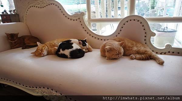 caturday cat cafeDSC04201.JPG