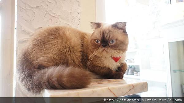 caturday cat cafeDSC04202.JPG