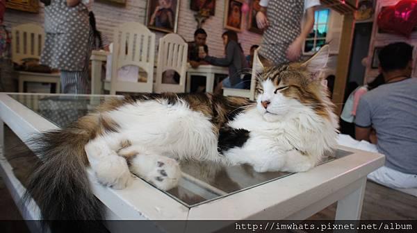 caturday cat cafeDSC04206.JPG