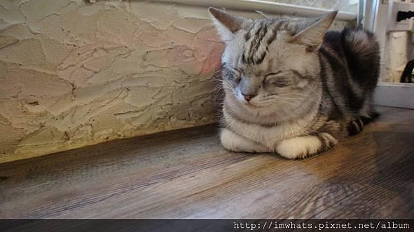 caturday cat cafeDSC04208.JPG