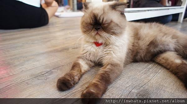 caturday cat cafeDSC04210.JPG