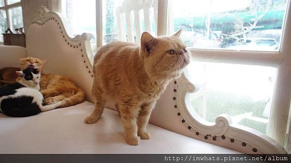 caturday cat cafeDSC04211.JPG