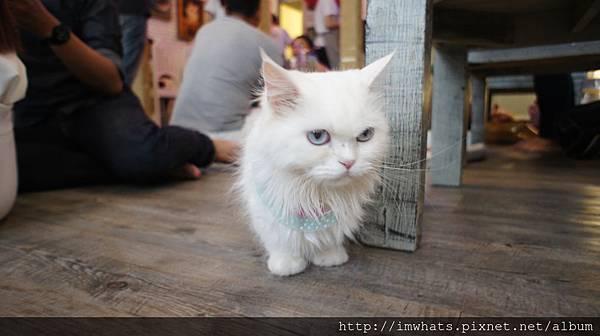 caturday cat cafeDSC04214.JPG