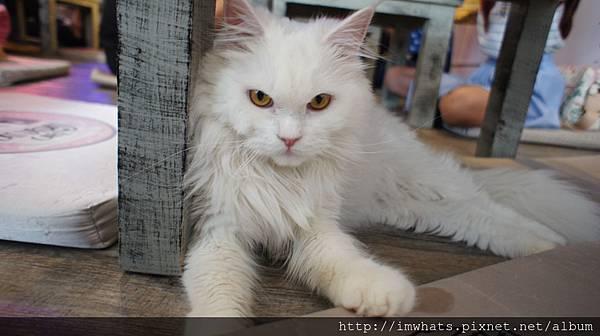 caturday cat cafeDSC04216.JPG