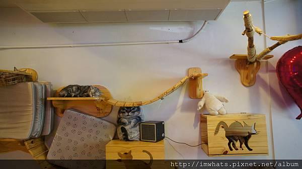 caturday cat cafeDSC04219.JPG