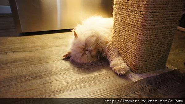 caturday cat cafeDSC04221.JPG