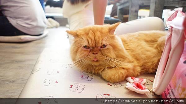 caturday cat cafeDSC04223.JPG
