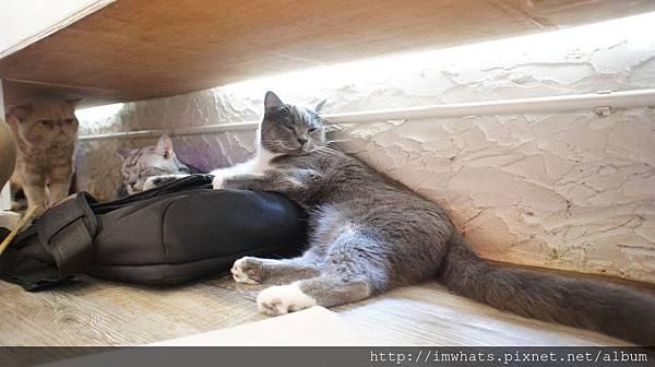 caturday cat cafeDSC04224.JPG