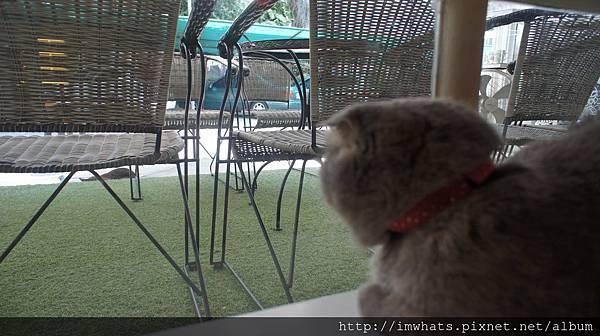 caturday cat cafeDSC04225.JPG