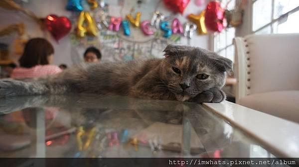 caturday cat cafeDSC04228.JPG