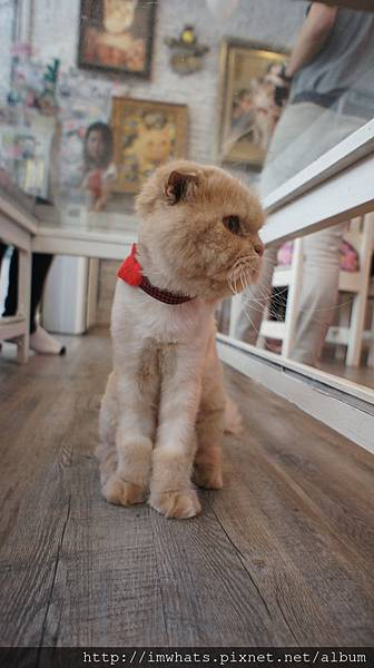 caturday cat cafeDSC04234.JPG