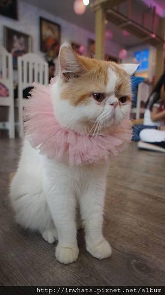 caturday cat cafeDSC04235.JPG