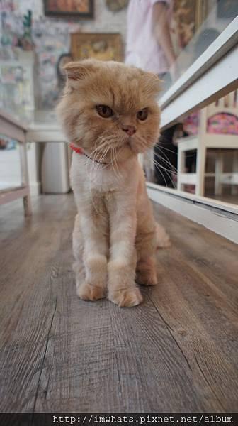 caturday cat cafeDSC04237.JPG