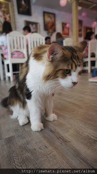 caturday cat cafeDSC04238.JPG