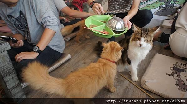 caturday cat cafeDSC04240.JPG