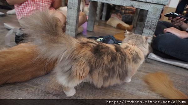 caturday cat cafeDSC04241.JPG