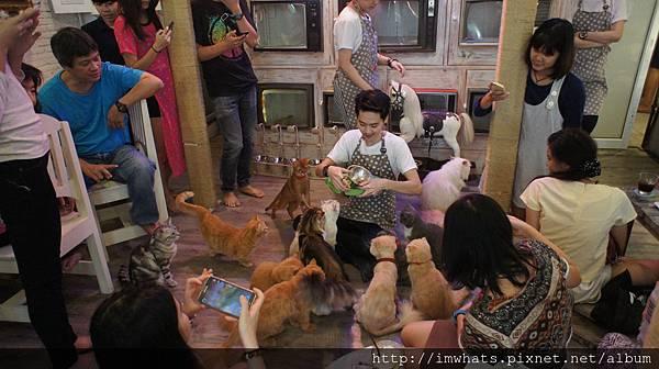 caturday cat cafeDSC04245.JPG