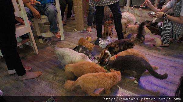 caturday cat cafeDSC04247.JPG