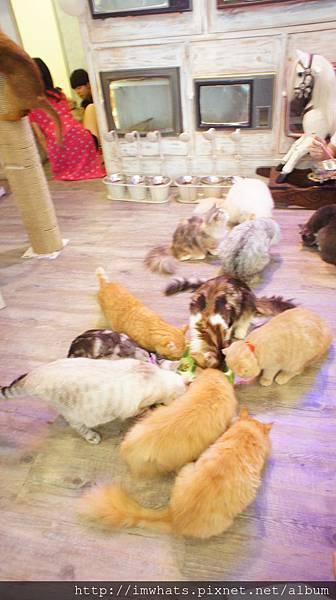 caturday cat cafeDSC04250.JPG