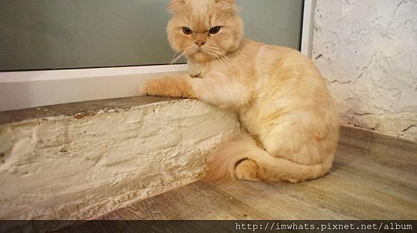 caturday cat cafeDSC04252.JPG