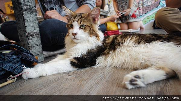 caturday cat cafeDSC04257.JPG