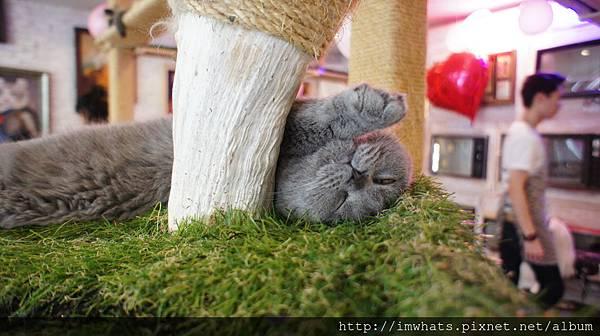 caturday cat cafeDSC04259.JPG