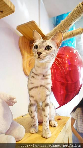 caturday cat cafeDSC04261.JPG